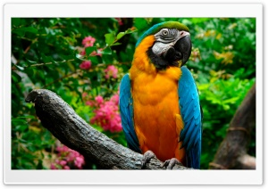 Parrots HD Wide Wallpaper for Widescreen