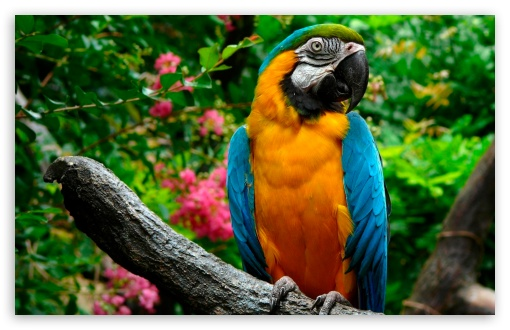Parrots HD wallpaper for Wide 16:10 5:3 Widescreen WHXGA WQXGA WUXGA WXGA WGA ; HD 16:9 High Definition WQHD QWXGA 1080p 900p 720p QHD nHD ; Standard 4:3 5:4 Fullscreen UXGA XGA SVGA QSXGA SXGA ; MS 3:2 DVGA HVGA HQVGA devices ( Apple PowerBook G4 iPhone 4 3G 3GS iPod Touch ) ; Mobile VGA WVGA iPhone iPad PSP Phone - VGA QVGA Smartphone ( PocketPC GPS iPod Zune BlackBerry HTC Samsung LG Nokia Eten Asus ) WVGA WQVGA Smartphone ( HTC Samsung Sony Ericsson LG Vertu MIO ) HVGA Smartphone ( Apple iPhone iPod BlackBerry HTC Samsung Nokia ) Sony PSP Zune HD Zen ; Tablet 1&2 ;