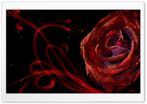 Passion By Diane Ozdamar HD Wide Wallpaper for Widescreen