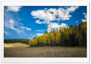 Pasture, Forest, Blue Sky HD Wide Wallpaper for Widescreen
