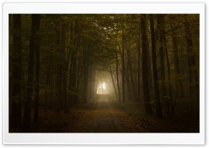 Path HD Wide Wallpaper for Widescreen