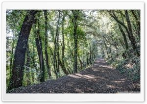 Path Between Trees Santa Pau, Catalonia HD Wide Wallpaper for 4K UHD Widescreen desktop & smartphone