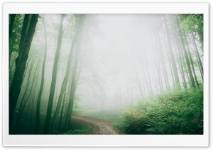 Path, Forest, Trees, Fog Ultra HD Wallpaper for 4K UHD Widescreen desktop, tablet & smartphone