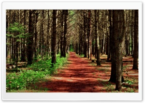 Path in the Forest HD Wide Wallpaper for Widescreen