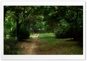 Path in the Park HD Wide Wallpaper for 4K UHD Widescreen desktop & smartphone