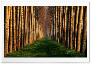 Path Lined With Trees HD Wide Wallpaper for Widescreen
