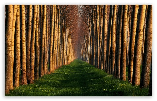 Path Lined With Trees HD wallpaper for Standard 4:3 5:4 Fullscreen UXGA XGA SVGA QSXGA SXGA ; Wide 16:10 5:3 Widescreen WHXGA WQXGA WUXGA WXGA WGA ; HD 16:9 High Definition WQHD QWXGA 1080p 900p 720p QHD nHD ; Other 3:2 DVGA HVGA HQVGA devices ( Apple PowerBook G4 iPhone 4 3G 3GS iPod Touch ) ; Mobile VGA WVGA iPhone iPad PSP Phone - VGA QVGA Smartphone ( PocketPC GPS iPod Zune BlackBerry HTC Samsung LG Nokia Eten Asus ) WVGA WQVGA Smartphone ( HTC Samsung Sony Ericsson LG Vertu MIO ) HVGA Smartphone ( Apple iPhone iPod BlackBerry HTC Samsung Nokia ) Sony PSP Zune HD Zen ; Tablet 2 Android ;