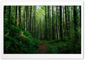 Path Through the Forest HD Wide Wallpaper for Widescreen