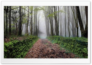 Path, Trees, Forest, Fog, Spring Ultra HD Wallpaper for 4K UHD Widescreen desktop, tablet & smartphone