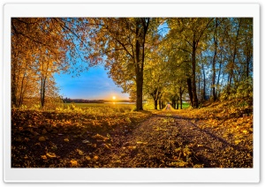 Pathway, Autumn HD Wide Wallpaper for 4K UHD Widescreen desktop & smartphone