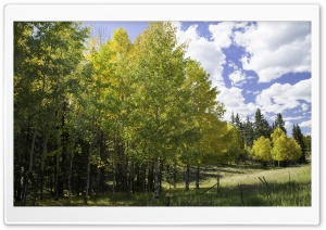 Peaceful, Aspen Trees HD Wide Wallpaper for Widescreen