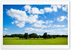 Peaceful Meadow HD Wide Wallpaper for Widescreen