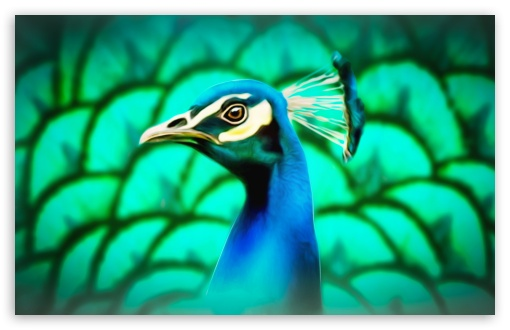 Peafowl Painting ❤ 4K UHD Wallpaper for Wide 16:10 5:3 Widescreen WHXGA WQXGA WUXGA WXGA WGA ; UltraWide 21:9 24:10 ; 4K UHD 16:9 Ultra High Definition 2160p 1440p 1080p 900p 720p ; UHD 16:9 2160p 1440p 1080p 900p 720p ; Standard 4:3 5:4 3:2 Fullscreen UXGA XGA SVGA QSXGA SXGA DVGA HVGA HQVGA ( Apple PowerBook G4 iPhone 4 3G 3GS iPod Touch ) ; Tablet 1:1 ; iPad 1/2/Mini ; Mobile 4:3 5:3 3:2 16:9 5:4 - UXGA XGA SVGA WGA DVGA HVGA HQVGA ( Apple PowerBook G4 iPhone 4 3G 3GS iPod Touch ) 2160p 1440p 1080p 900p 720p QSXGA SXGA ;
