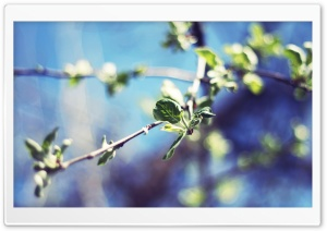 Pear Tree Twigs, Bokeh HD Wide Wallpaper for Widescreen