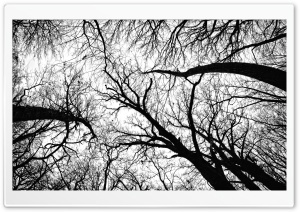 Pecan Grove Black And White HD Wide Wallpaper for 4K UHD Widescreen desktop & smartphone