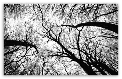 Pecan Grove Black And White HD wallpaper for Standard 4:3 5:4 Fullscreen UXGA XGA SVGA QSXGA SXGA ; Wide 16:10 5:3 Widescreen WHXGA WQXGA WUXGA WXGA WGA ; HD 16:9 High Definition WQHD QWXGA 1080p 900p 720p QHD nHD ; Other 3:2 DVGA HVGA HQVGA devices ( Apple PowerBook G4 iPhone 4 3G 3GS iPod Touch ) ; Mobile VGA WVGA iPhone iPad PSP Phone - VGA QVGA Smartphone ( PocketPC GPS iPod Zune BlackBerry HTC Samsung LG Nokia Eten Asus ) WVGA WQVGA Smartphone ( HTC Samsung Sony Ericsson LG Vertu MIO ) HVGA Smartphone ( Apple iPhone iPod BlackBerry HTC Samsung Nokia ) Sony PSP Zune HD Zen ; Tablet 2 Android 3 DVGA HVGA HQVGA devices ( Apple PowerBook G4 iPhone 4 3G 3GS iPod Touch ) ; Dual 4:3 5:4 16:10 5:3 16:9 UXGA XGA SVGA QSXGA SXGA WHXGA WQXGA WUXGA WXGA WGA WQHD QWXGA 1080p 900p 720p QHD nHD ;