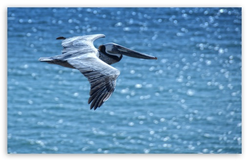 Pelican HD wallpaper for Standard 4:3 5:4 Fullscreen UXGA XGA SVGA QSXGA SXGA ; Wide 16:10 5:3 Widescreen WHXGA WQXGA WUXGA WXGA WGA ; HD 16:9 High Definition WQHD QWXGA 1080p 900p 720p QHD nHD ; Other 3:2 DVGA HVGA HQVGA devices ( Apple PowerBook G4 iPhone 4 3G 3GS iPod Touch ) ; Mobile VGA WVGA iPhone iPad PSP Phone - VGA QVGA Smartphone ( PocketPC GPS iPod Zune BlackBerry HTC Samsung LG Nokia Eten Asus ) WVGA WQVGA Smartphone ( HTC Samsung Sony Ericsson LG Vertu MIO ) HVGA Smartphone ( Apple iPhone iPod BlackBerry HTC Samsung Nokia ) Sony PSP Zune HD Zen ; Tablet 2 Android ; Dual 4:3 5:4 UXGA XGA SVGA QSXGA SXGA ;