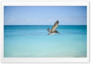 Pelican HD Wide Wallpaper for Widescreen