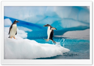 Penguin Jumping HD Wide Wallpaper for 4K UHD Widescreen desktop & smartphone