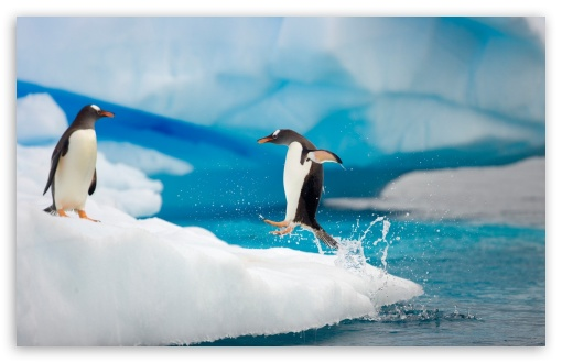 Penguin Jumping ❤ 4K UHD Wallpaper for Wide 16:10 5:3 Widescreen WHXGA WQXGA WUXGA WXGA WGA ; 4K UHD 16:9 Ultra High Definition 2160p 1440p 1080p 900p 720p ; Standard 4:3 5:4 3:2 Fullscreen UXGA XGA SVGA QSXGA SXGA DVGA HVGA HQVGA ( Apple PowerBook G4 iPhone 4 3G 3GS iPod Touch ) ; Tablet 1:1 ; iPad 1/2/Mini ; Mobile 4:3 5:3 3:2 16:9 5:4 - UXGA XGA SVGA WGA DVGA HVGA HQVGA ( Apple PowerBook G4 iPhone 4 3G 3GS iPod Touch ) 2160p 1440p 1080p 900p 720p QSXGA SXGA ; Dual 16:10 5:3 4:3 5:4 WHXGA WQXGA WUXGA WXGA WGA UXGA XGA SVGA QSXGA SXGA ;