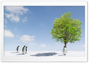 Penguins Group in Antarctica HD Wide Wallpaper for Widescreen