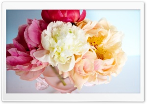 Peony Bouquet HD Wide Wallpaper for Widescreen