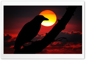 Perched Raven Silhouette, Red Sunset HD Wide Wallpaper for Widescreen