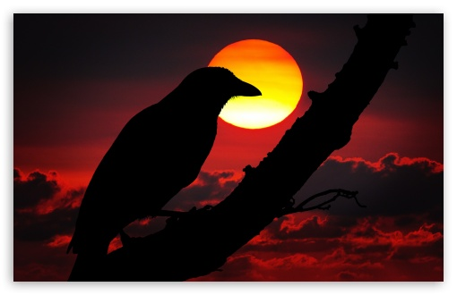 Perched Raven Silhouette, Red Sunset ❤ 4K UHD Wallpaper for Wide 16:10 5:3 Widescreen WHXGA WQXGA WUXGA WXGA WGA ; UltraWide 21:9 ; 4K UHD 16:9 Ultra High Definition 2160p 1440p 1080p 900p 720p ; Standard 4:3 5:4 3:2 Fullscreen UXGA XGA SVGA QSXGA SXGA DVGA HVGA HQVGA ( Apple PowerBook G4 iPhone 4 3G 3GS iPod Touch ) ; Tablet 1:1 ; iPad 1/2/Mini ; Mobile 4:3 5:3 3:2 16:9 5:4 - UXGA XGA SVGA WGA DVGA HVGA HQVGA ( Apple PowerBook G4 iPhone 4 3G 3GS iPod Touch ) 2160p 1440p 1080p 900p 720p QSXGA SXGA ;
