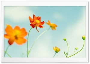 Perfect Flower HD Wide Wallpaper for Widescreen