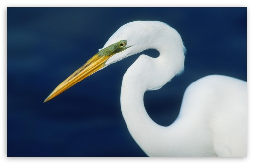 Perfect Form Egret HD wallpaper for Wide 16:10 5:3 Widescreen WHXGA WQXGA WUXGA WXGA WGA ; HD 16:9 High Definition WQHD QWXGA 1080p 900p 720p QHD nHD ; Standard 4:3 5:4 3:2 Fullscreen UXGA XGA SVGA QSXGA SXGA DVGA HVGA HQVGA devices ( Apple PowerBook G4 iPhone 4 3G 3GS iPod Touch ) ; iPad 1/2/Mini ; Mobile 4:3 5:3 3:2 16:9 5:4 - UXGA XGA SVGA WGA DVGA HVGA HQVGA devices ( Apple PowerBook G4 iPhone 4 3G 3GS iPod Touch ) WQHD QWXGA 1080p 900p 720p QHD nHD QSXGA SXGA ;