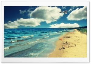 Perfect Ocean Beach - Birds HD Wide Wallpaper for Widescreen