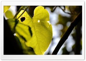 Perforated Leaf HD Wide Wallpaper for Widescreen