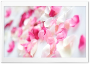 Petals HD Wide Wallpaper for Widescreen