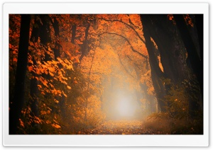 Picturesque Scenes, Tree Tunnel, Fall HD Wide Wallpaper for 4K UHD Widescreen desktop & smartphone