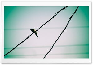 Pigeon On A Wire HD Wide Wallpaper for Widescreen