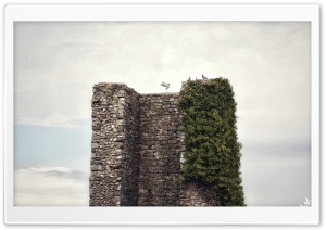 Pigeon on the Tower Ultra HD Wallpaper for 4K UHD Widescreen desktop, tablet & smartphone