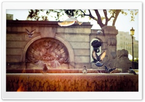 Pigeons On A Fountain HD Wide Wallpaper for Widescreen