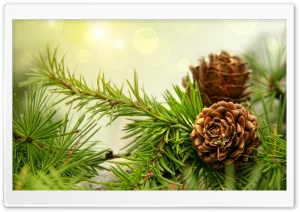 Pine Cones HD Wide Wallpaper for Widescreen