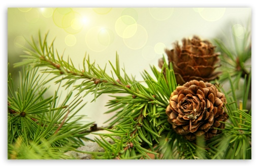 Pine Cones HD wallpaper for Wide 16:10 5:3 Widescreen WHXGA WQXGA WUXGA WXGA WGA ; HD 16:9 High Definition WQHD QWXGA 1080p 900p 720p QHD nHD ; Standard 4:3 5:4 3:2 Fullscreen UXGA XGA SVGA QSXGA SXGA DVGA HVGA HQVGA devices ( Apple PowerBook G4 iPhone 4 3G 3GS iPod Touch ) ; Tablet 1:1 ; iPad 1/2/Mini ; Mobile 4:3 5:3 3:2 16:9 5:4 - UXGA XGA SVGA WGA DVGA HVGA HQVGA devices ( Apple PowerBook G4 iPhone 4 3G 3GS iPod Touch ) WQHD QWXGA 1080p 900p 720p QHD nHD QSXGA SXGA ; Dual 16:10 5:3 16:9 4:3 5:4 WHXGA WQXGA WUXGA WXGA WGA WQHD QWXGA 1080p 900p 720p QHD nHD UXGA XGA SVGA QSXGA SXGA ;