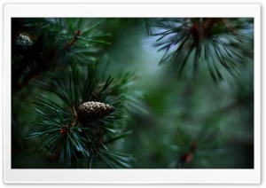 Pine Cones And Twigs HD Wide Wallpaper for Widescreen