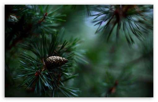 Pine Cones And Twigs HD wallpaper for Wide 16:10 5:3 Widescreen WHXGA WQXGA WUXGA WXGA WGA ; HD 16:9 High Definition WQHD QWXGA 1080p 900p 720p QHD nHD ; Standard 4:3 5:4 3:2 Fullscreen UXGA XGA SVGA QSXGA SXGA DVGA HVGA HQVGA devices ( Apple PowerBook G4 iPhone 4 3G 3GS iPod Touch ) ; iPad 1/2/Mini ; Mobile 4:3 5:3 3:2 5:4 - UXGA XGA SVGA WGA DVGA HVGA HQVGA devices ( Apple PowerBook G4 iPhone 4 3G 3GS iPod Touch ) QSXGA SXGA ; Dual 16:10 5:3 WHXGA WQXGA WUXGA WXGA WGA ;