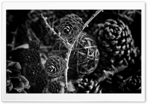 Pine Cones Decorations Black and White HD Wide Wallpaper for 4K UHD Widescreen desktop & smartphone