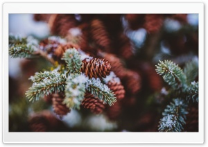 Pine Cones Snow HD Wide Wallpaper for Widescreen