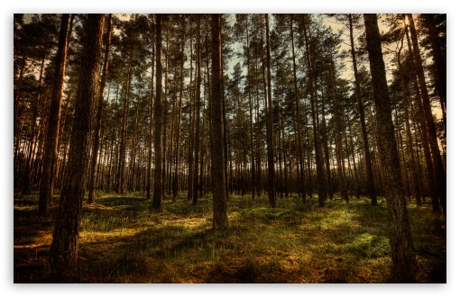 Pine Forest, HDR ❤ 4K UHD Wallpaper for Wide 16:10 5:3 Widescreen WHXGA WQXGA WUXGA WXGA WGA ; 4K UHD 16:9 Ultra High Definition 2160p 1440p 1080p 900p 720p ; Standard 4:3 5:4 3:2 Fullscreen UXGA XGA SVGA QSXGA SXGA DVGA HVGA HQVGA ( Apple PowerBook G4 iPhone 4 3G 3GS iPod Touch ) ; Tablet 1:1 ; iPad 1/2/Mini ; Mobile 4:3 5:3 3:2 16:9 5:4 - UXGA XGA SVGA WGA DVGA HVGA HQVGA ( Apple PowerBook G4 iPhone 4 3G 3GS iPod Touch ) 2160p 1440p 1080p 900p 720p QSXGA SXGA ; Dual 5:4 QSXGA SXGA ;