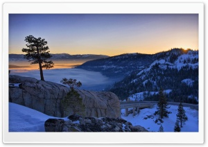 Pine Tree At Sunrise Above A Foggy Donner Lake In California HD Wide Wallpaper for 4K UHD Widescreen desktop & smartphone