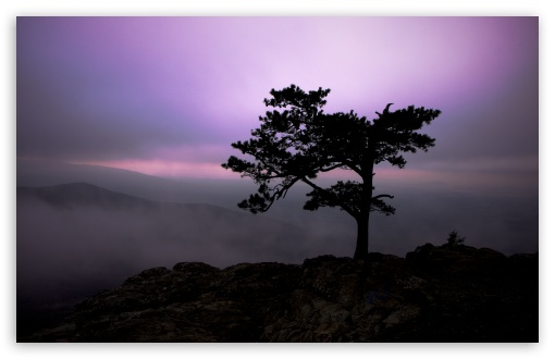 Pine Tree At Twilight HD wallpaper for Wide 16:10 5:3 Widescreen WHXGA WQXGA WUXGA WXGA WGA ; HD 16:9 High Definition WQHD QWXGA 1080p 900p 720p QHD nHD ; Standard 4:3 5:4 3:2 Fullscreen UXGA XGA SVGA QSXGA SXGA DVGA HVGA HQVGA devices ( Apple PowerBook G4 iPhone 4 3G 3GS iPod Touch ) ; Tablet 1:1 ; iPad 1/2/Mini ; Mobile 4:3 5:3 3:2 16:9 5:4 - UXGA XGA SVGA WGA DVGA HVGA HQVGA devices ( Apple PowerBook G4 iPhone 4 3G 3GS iPod Touch ) WQHD QWXGA 1080p 900p 720p QHD nHD QSXGA SXGA ; Dual 5:4 QSXGA SXGA ;