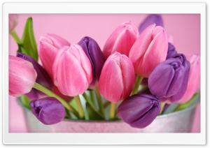 Pink And Purple Tulips HD Wide Wallpaper for Widescreen