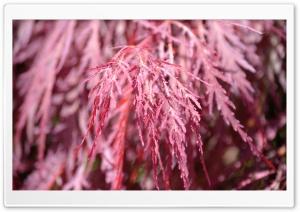 Pink Angel Hair Ultra HD Wallpaper for 4K UHD Widescreen desktop, tablet & smartphone