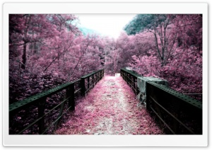 Pink Autumn HD Wide Wallpaper for Widescreen
