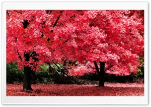 Pink Autumn Foliage HD Wide Wallpaper for Widescreen